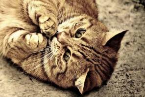 Zróbcie miau! – internetowy generator mruku