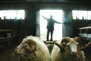 """""""Barany. Islandzka opowieść"""" – Zagubione owieczki"""