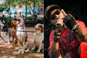 Członek Wu-Tang Clan zaskarżył firmę wyprowadzającą psy. Poszło o nazwę i logo