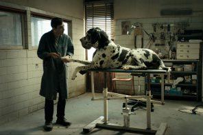"""Kolejny mocny kandydat w wyścigu o Złotą Palmę. Oto """"Dogman"""" ulubieńca Cannes, Matteo Garrone"""
