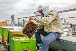 Pszczoły w wielkim mieście, czyli miód z dachu. Spotkanie z Pszczelarium.