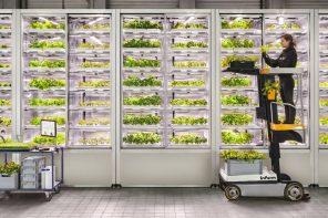 uprawa roślin w supermarkecie