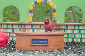 podglądanie ptaków live