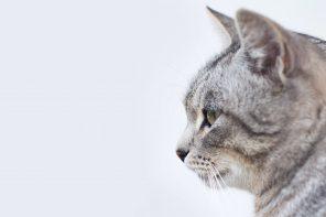 renesansowe malowidła koty