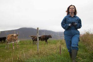 islandzki film gutek