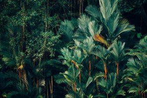 zielony wieżowiec australia