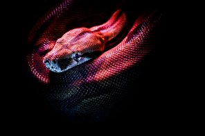 wąż nazwany na cześć hetfielda