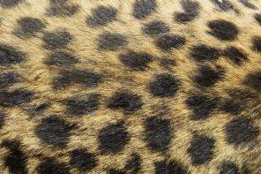 izrael zakaz sprzedaży futer