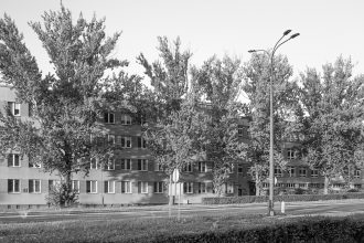 drzewa warszawy
